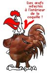 IMG/poulet